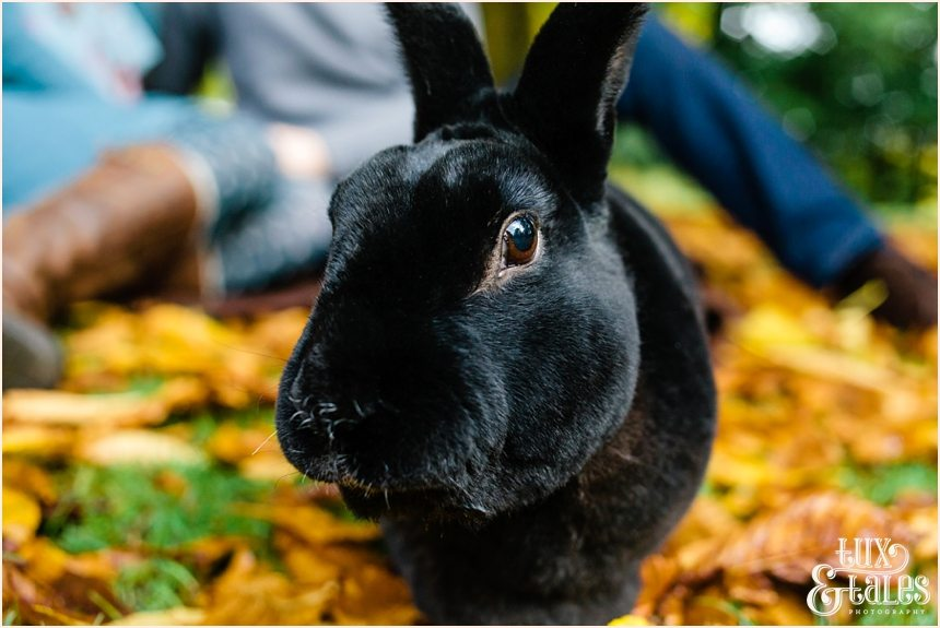 York Engagement shoot with rabbit