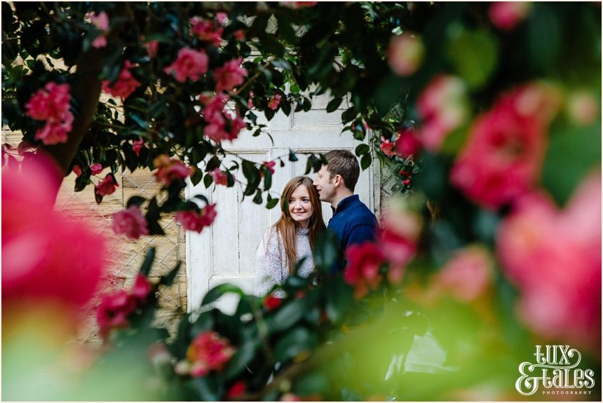 Beautiful engaged couple in the roses at the Yorkshire Sculpture Park orangery