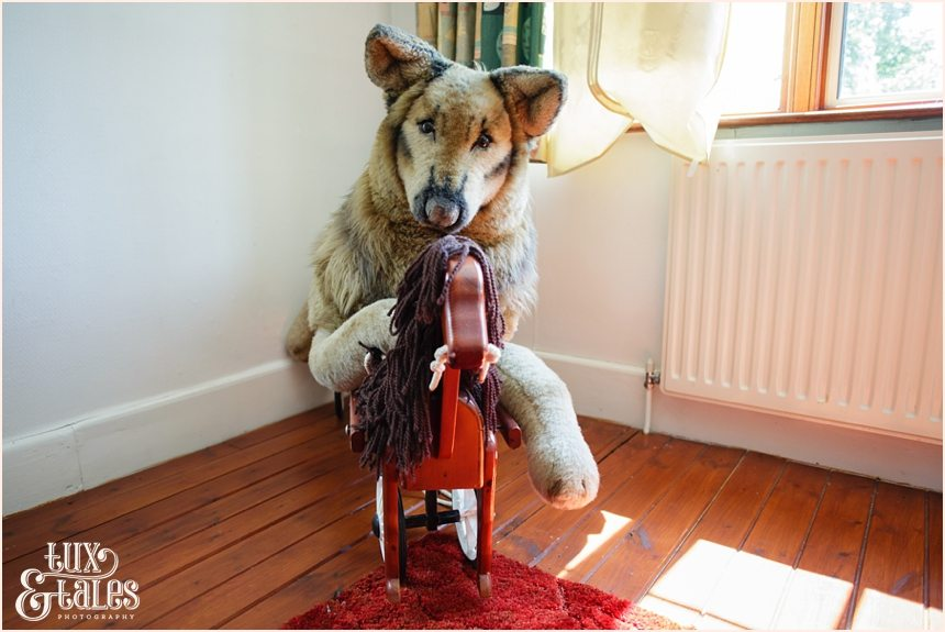 Stuffed dog riding a rocking horse