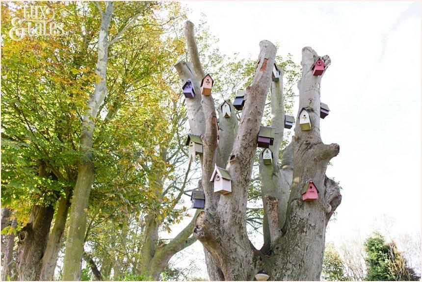 Tree full of birdhouses wedding details at Newton Hall beachside wedding