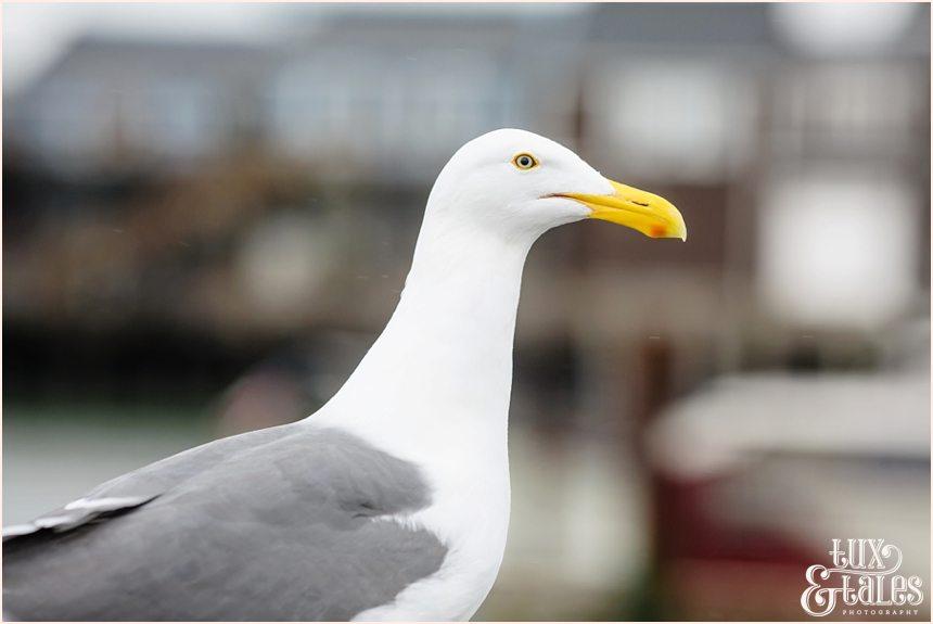 San Francisco Photography - Seagull