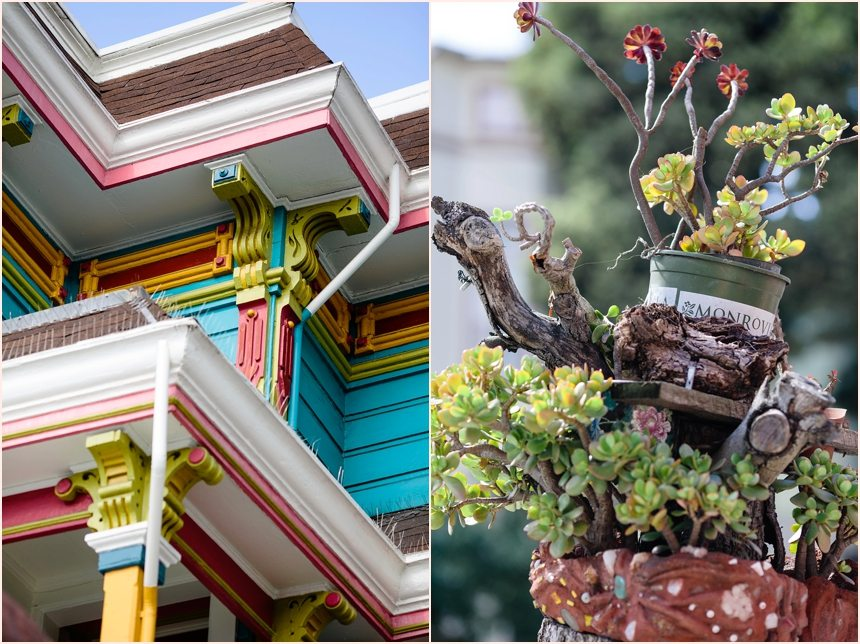 San Francisco Photography - colourful building & succulent plant
