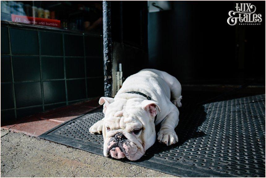 San Francisco Photography - Bulldog