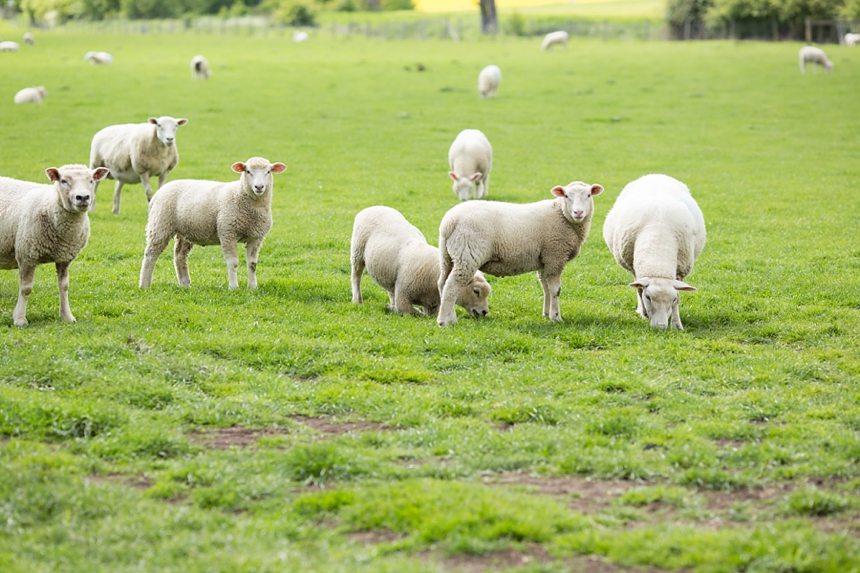 Furtho Manor Farm Wedding Photography