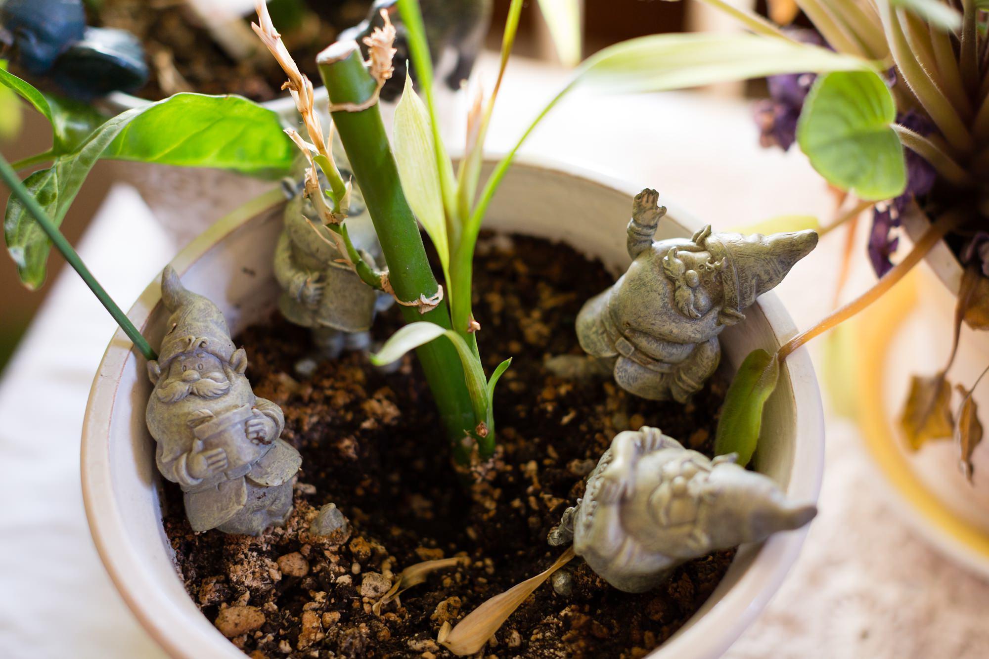 Gnomes in plant pot