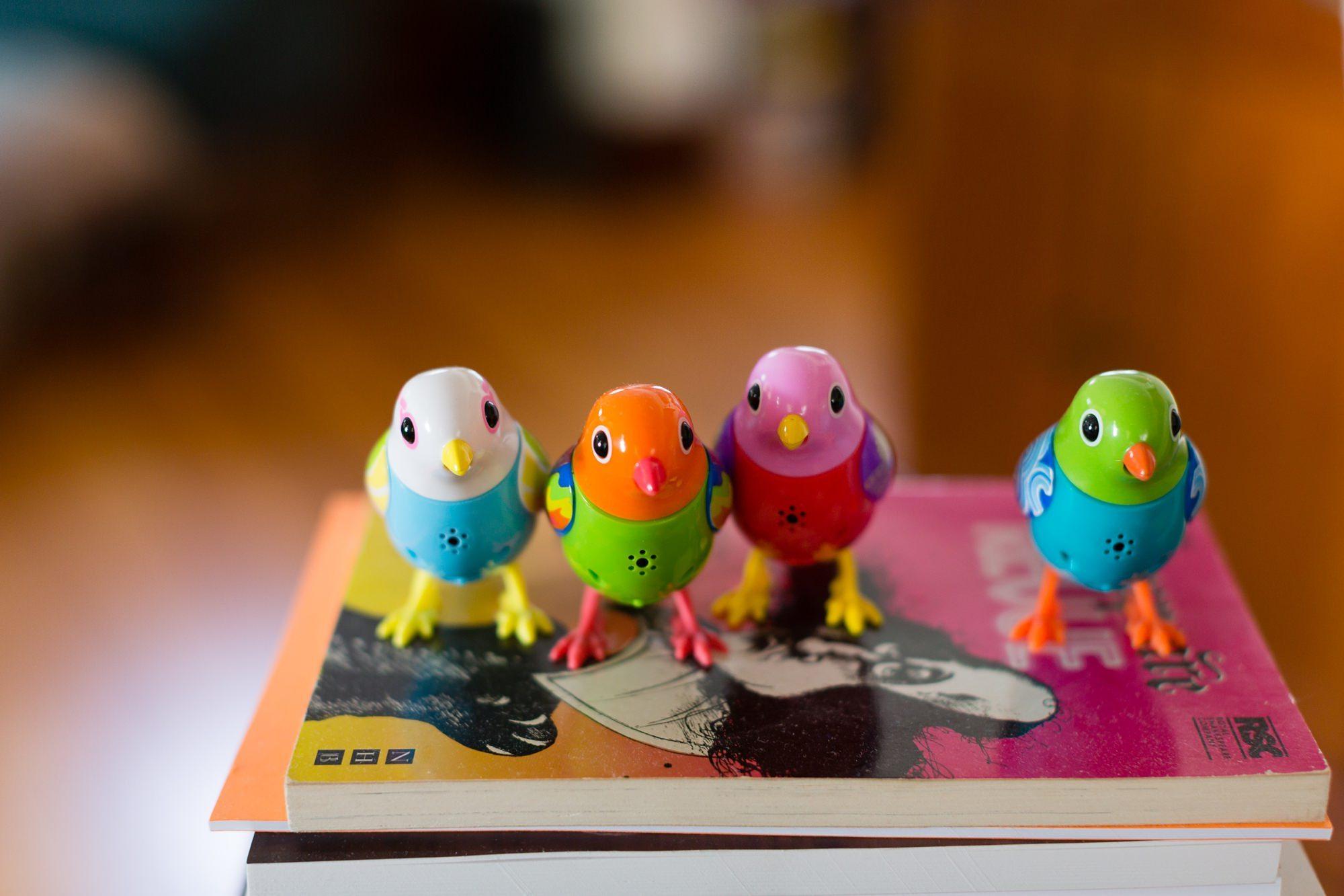 Parakeet wind up toys